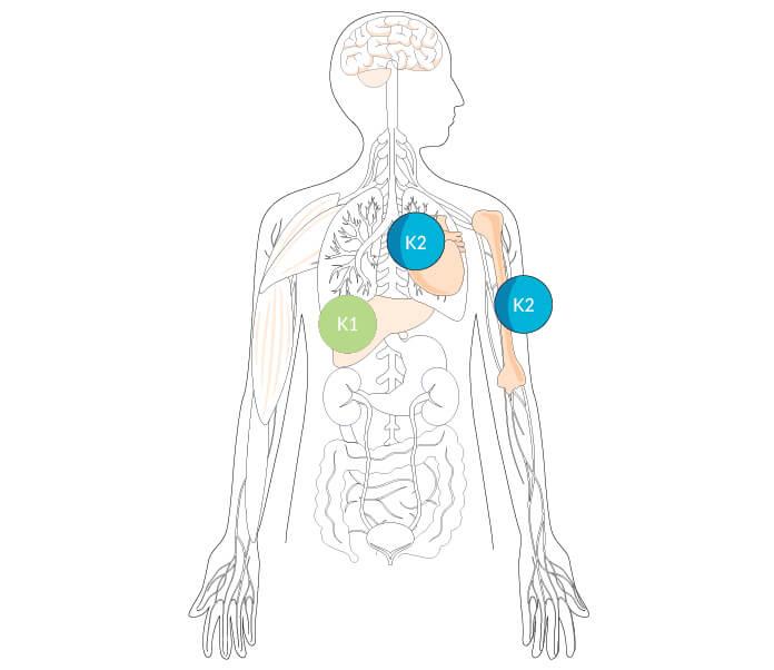 Vitamin K2 Bone Health