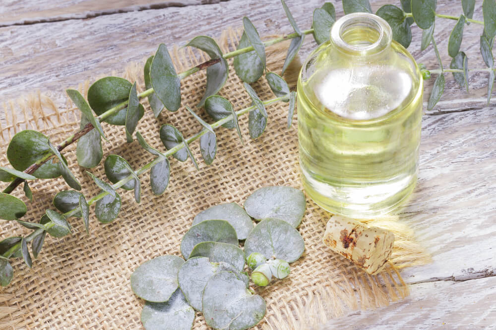 eucalyptus and essential oil