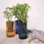 Two jars of green plants on wooden floor and white wall with a striped dish cloth next to them